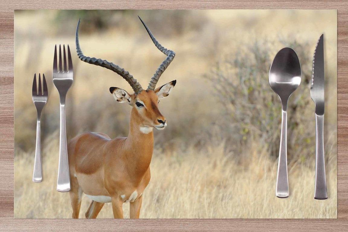 Prestieranie Antilopa